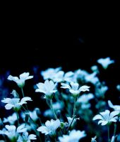 Blue and white by CocoaDesert
