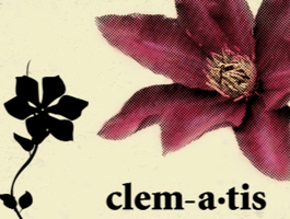 clematis by boss13055
