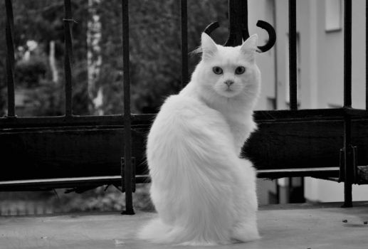 White cat by Avek