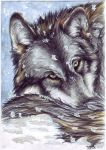 snowwolf_3 of 3 by SteelC