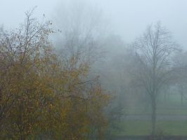trees in the mist by luintje