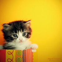 Cute look kitten 2-3 by mayat-s