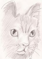 KITTY by littlewolfmoccasin