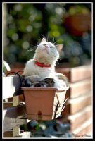 Cat in the Pot by jevigar