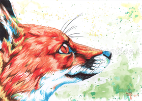 Bright Eyed Fox by SweetIllustrations