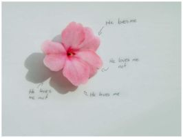 Meaning of The Petals by Red--Roses