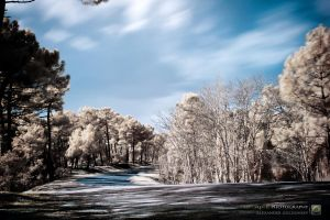 Infrared curves by 10thapril