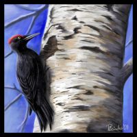 Black Woodpecker by Emberiza