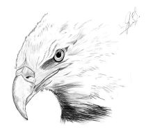 Eye Of An Eagle. by JaymzTheDragon471