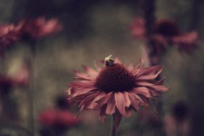 Bee and flower by Winstein