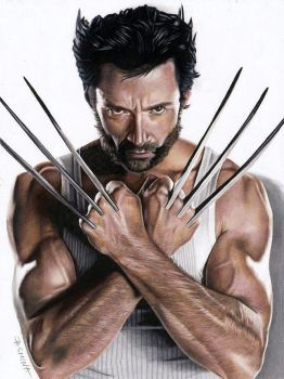 Drawing Wolverine by JasminaSusak