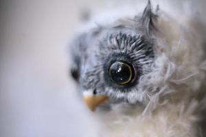 owl close up by da-bu-di-bu-da