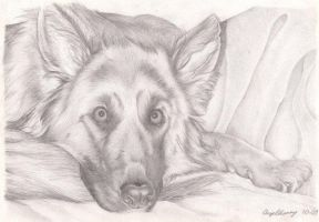 Pencil Drawing Of Dog by legendkiller718