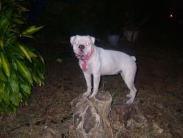Ayla and a Stump by karja