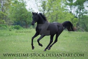 solid black arabian canter at camera by slime-stock
