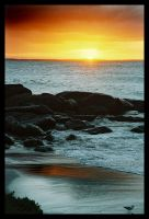 Augusta sunrise 1 - seagull by wildplaces