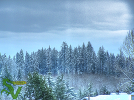 Distant Snowy Trees HDR by shilpinator