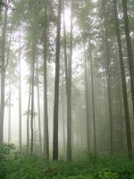 fog in forest by alkioni