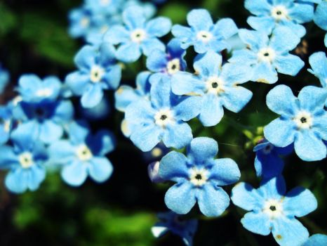 Forget Me Not by Superbiaa