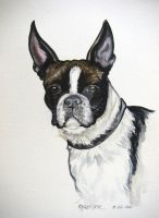 Boston Terrier Watercolor by HouseofChabrier