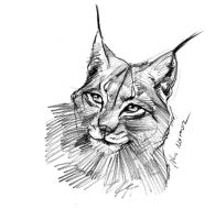 mandatory daily cat sketch 1604 by nosoart