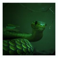Green Mamba by madrush08