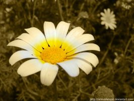 flower07 by ahmedyousri