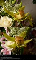 Green Orchid Stock by Melyssah6-Stock