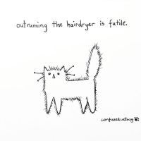confusedcatsay: outrunning the hairdryer is futile by fuzziescomics