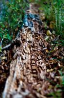 Herbststruktur I by thogro