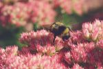 Little Bumblebee by Hazel-Photography