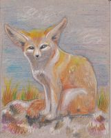 Fennec Fox by Benghi