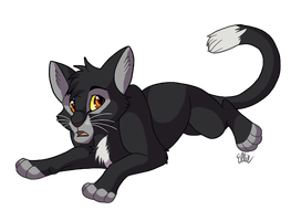 Ravenpaw by WindWo1f