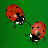 lady bug by suraj1989