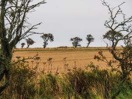 Northumbrian Field. England. by jennystokes
