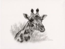 Giraffe Study - Graphite Drawing by ShaleseSands