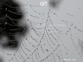 Spider Web Pack III Stock by Moonchilde-Stock
