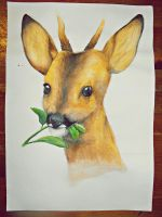 Young Male Deer by MemoryInTime