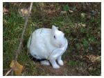 White Rabbit_Wild Life Park by rabb1t