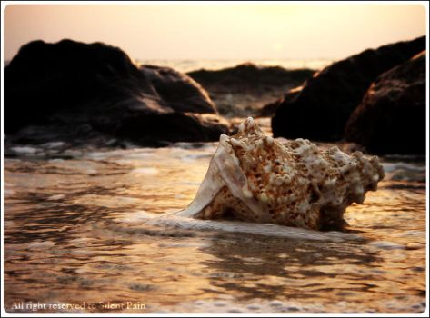 Conch ... by SilentPain0