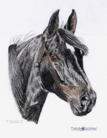Black horse portrait by goldenpaw