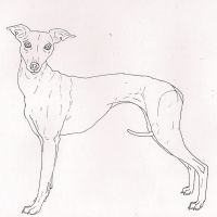 Whippet by me-and-mojo