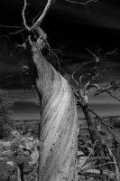 Infrared Canyon Tree 2 by DavidLPhotography