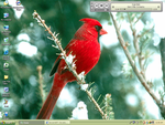 Cardinal by Relient-K