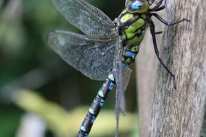 Dragonfly by Prototyps