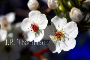 More flowers by thaddman