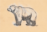 Grizzly Bear Sketch by AltaikaTau