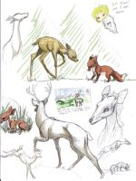 Oh Deer, studies by PaperRedemption