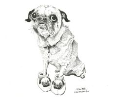 pug wearing pugs by melayn
