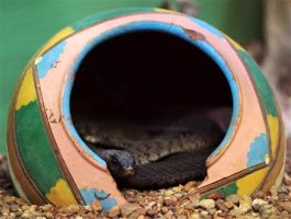 Snake In A Pot by FSGPhotography